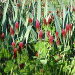 Mélange de plantes