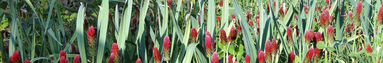 Associations de plantes