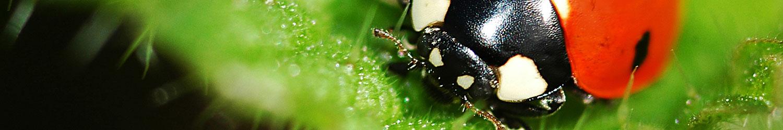 Insectes auxiliaires du jardin