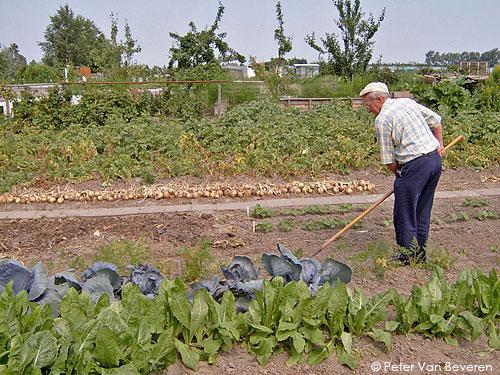 jardinier amateurs
