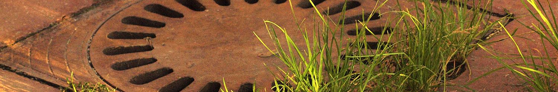 herbes folles en ville