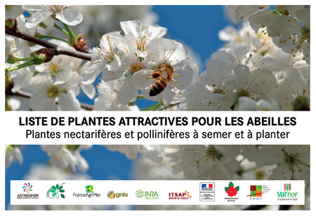 LISTE DE PLANTES ATTRACTIVES POUR LES ABEILLES Plantes nectarifères et pollinifères à semer et à planter