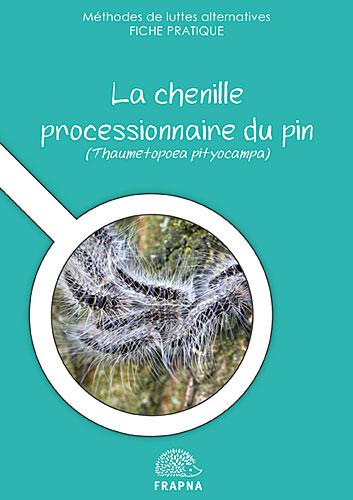 chenille-processionnaire-du-pin