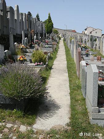 cimetière enherbée